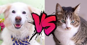 広告効果~犬vs猫~?!
